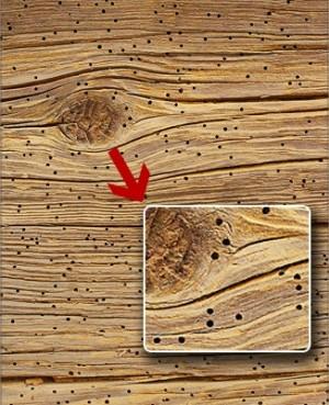 все виды паразитов в организме человека фото